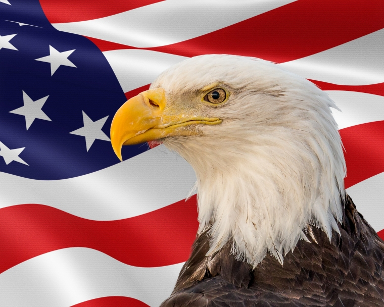 flag bald eagle